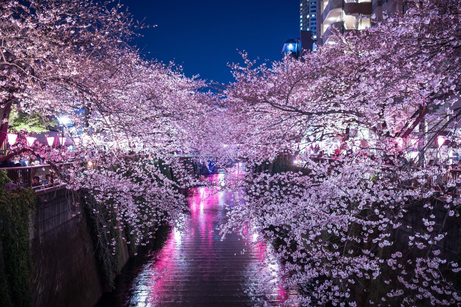 夜桜撮影コツ